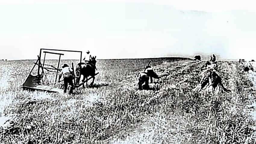 The McCormick Autorake in the field