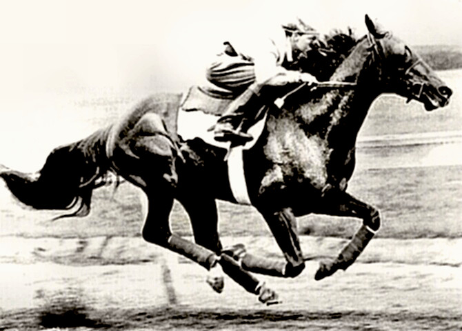 Whirlaway in 1941